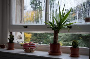 How Kiwis Tackle Moisture Problems in the Home