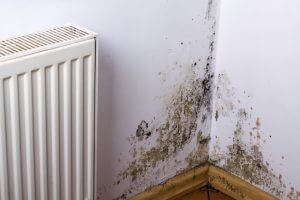 mould in corner of room