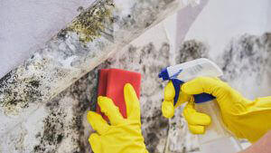 cleaning mould from home