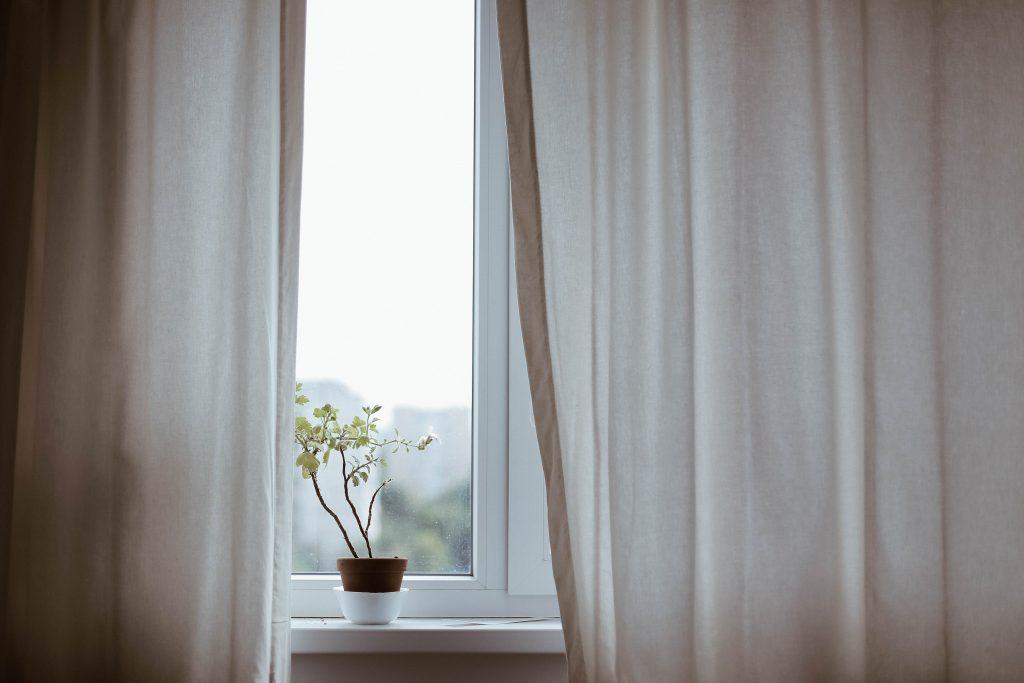 plant on window sill
